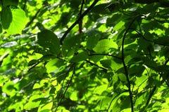 Sommar Forrest royaltyfri fotografi