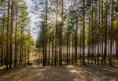 Sommar Forrest Arkivfoto