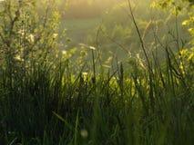 sommar gräs arkivfoto