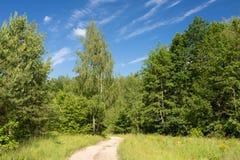 Sommar gröna Forest Countryside Road, bana, väg, gränd, bana Arkivfoton
