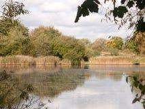 Sommar guld- vatten för utvändigt land för bästa yttersida för sjöplats Arkivbilder