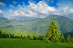 Sommar i bergen Arkivbilder