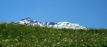 Sommar i de schweiziska fjällängarna Royaltyfria Foton