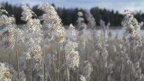 sommar i Estland Royaltyfria Bilder