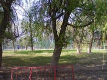 Sommar i parkera Arkivbild
