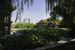 Sommar i Peking Longtan parkerar Royaltyfria Foton