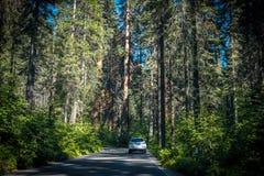 Sommar i sequoianationalparken, Kalifornien, USA Biltur till och med skogen av sequoior Royaltyfri Fotografi