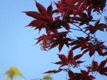 SOMMAR KOREA Royaltyfria Bilder