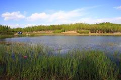 Sommar lake Royaltyfri Bild