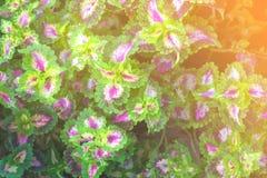 Sommar med det gröna bladet för abstrakt bakgrund Arkivfoto