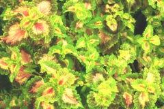 Sommar med det gröna bladet för abstrakt bakgrund Arkivbilder