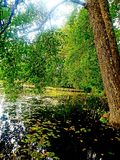 Sommar och trädet på sjön fotografering för bildbyråer