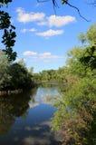Sommar på floden Royaltyfri Bild