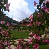 Sommar paradize Royaltyfri Bild