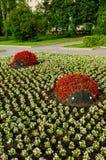Sommar parkerar att landskap sikten - blomsterrabatter med att landskap detaljer i form av nyckelpigor som täckas med röda begoni Royaltyfri Foto