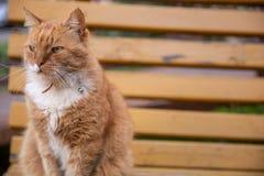 Sommar parkerar eller arbeta i trädgården den utomhus- detaljen - den härliga röda och vit avrivna röda europeiska katten ligger  arkivfoton