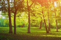 Sommar parkerar landskapet, sommar parkerar i soligt väder på solnedgången Royaltyfri Bild