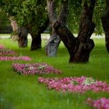 Sommar parkerar med blommor och stora träd Arkivfoton
