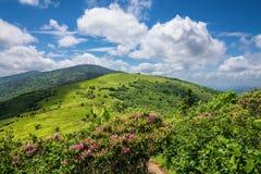 Sommar Roan Mountain Bloom Arkivfoto