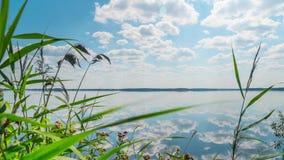 Sommar sjö med örter, Time-schackningsperiod med en glidare stock video