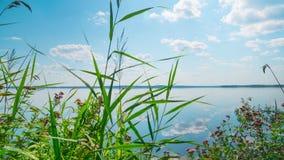 Sommar sjö med örter, Time-schackningsperiod med en glidare lager videofilmer