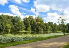 Sommar sjö med näckrors Arkivbild