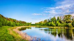 Sommar sjö nära skogen Arkivfoto