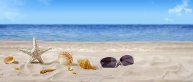 Sommar sjöstjärna på sand arkivfoton