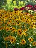 Sommar: solbelyst gul gräns för blommaträdgård arkivbild