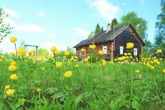 sommar stuga, blommor, blommor, sommar, Arkivbild