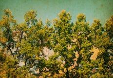 Sommar Sunny Forest Trees Royaltyfri Foto