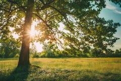 Sommar Sunny Forest Trees And Green Grass Naturträsolljus Royaltyfri Foto