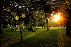 Sommar Sunny Forest Trees And Green Grass Wood solljusbakgrund för natur Ögonblick tonad bild Arkivfoto
