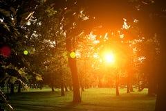 Sommar Sunny Forest Trees And Green Grass Wood solljusbakgrund för natur Ögonblick tonad bild med colorfulinssignalljus Royaltyfria Foton
