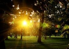 Sommar Sunny Forest Trees And Green Grass Wood solljusbakgrund för natur Ögonblick tonad bild med colorfulinssignalljus Royaltyfri Foto