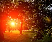 Sommar Sunny Forest Trees And Green Grass Wood solljusbakgrund för natur Ögonblicken tonade bild med bärnstensfärgad röd solglori Arkivfoton