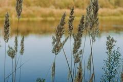 Sommar Sunny Forest Trees And Green Grass Wood solljusbakgrund för natur Arkivfoton