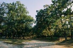 Sommar Sunny Forest Trees And Green Grass Wood solljusbakgrund för natur Royaltyfria Bilder