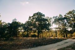 Sommar Sunny Forest Trees And Green Grass Wood solljusbakgrund för natur Royaltyfria Foton