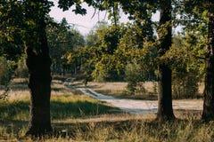 Sommar Sunny Forest Trees And Green Grass Wood solljusbakgrund för natur Arkivfoto
