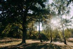 Sommar Sunny Forest Trees And Green Grass Wood solljusbakgrund för natur Royaltyfri Fotografi