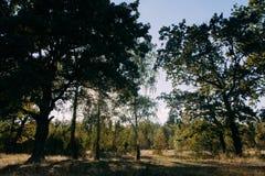 Sommar Sunny Forest Trees And Green Grass Wood solljusbakgrund för natur Fotografering för Bildbyråer