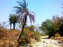 Sommar torkad flod i tropisk indisk skog Arkivbilder