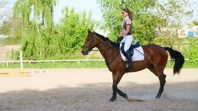 Sommar utomhus, flickaryttare, jockeyridning på en fullblods- härlig brun hingst, häst, på utbildningsjordningen lager videofilmer