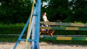 Sommar utomhus, flickaryttare, jockeyridning på en fullblods- härlig brun hingst, häst, på utbildningsjordningen stock video