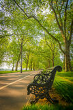 Sommarafton i Hyde Park Royaltyfri Fotografi