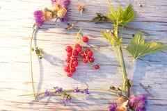 Sommarbär- och blommaram för text Arkivbild