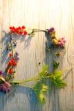 Sommarbär- och blommaram för text Royaltyfria Bilder