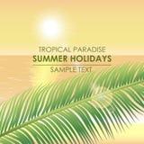 Sommarbakgrund - ett tropiskt paradis Gömma i handflatan filialen på en backgr Royaltyfri Fotografi