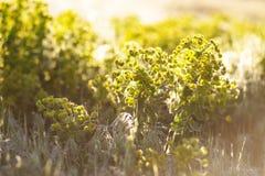 Sommarbakgrund - frodiga vildblommor i de guld- strålarna av set Royaltyfria Foton